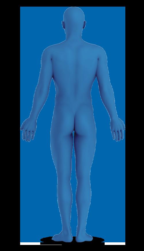 אילוסטרציה של גוף האדם